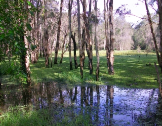 Hemmant Tingalpa Rd Wetlands