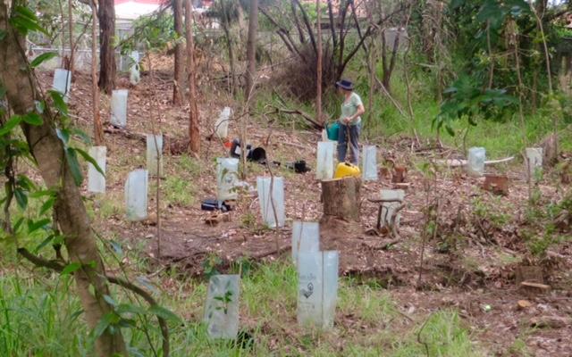 bushcarers planting