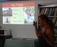 Debbie Pointing of Koala Action Group