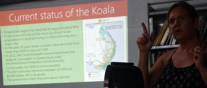 status of the koala