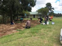 Deloittes volunteers planting at Wally Tate Park, Kuraby