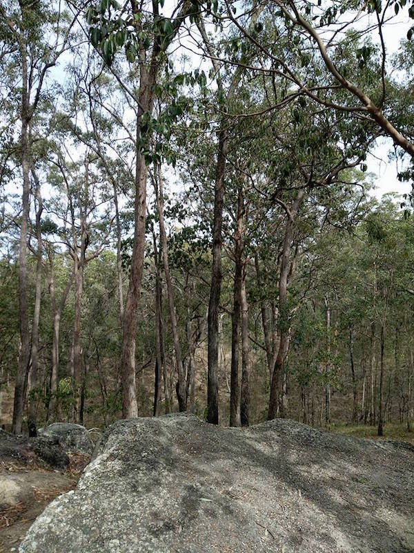Karawatha Forest
