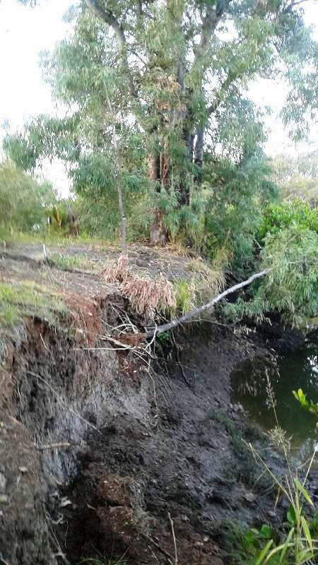 Bank erosion at Cabbage Tree Creek