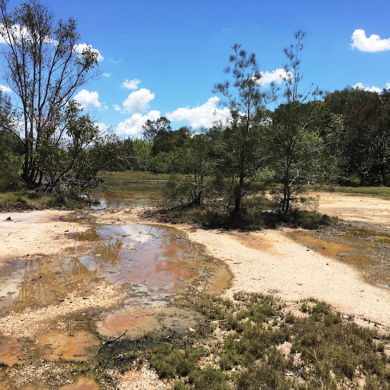 Saltmarsh area at Cabbage Tree Creek that we will be rehabilitating