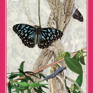 Create More Butterflies - buy book online, Brisbane