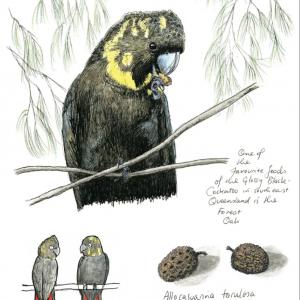 Glossy Black Cockatoo - card